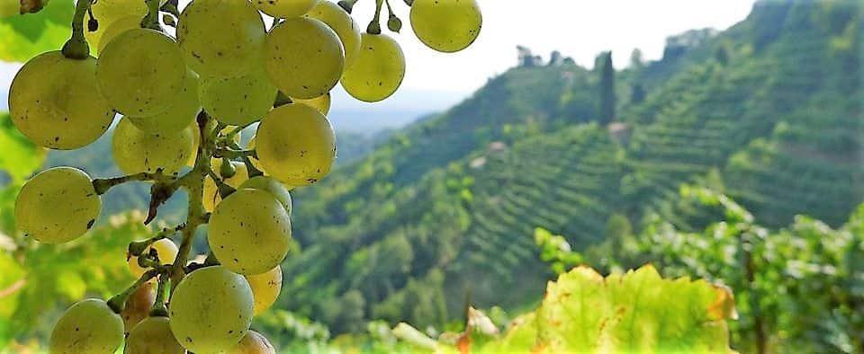 Collines Prosecco patrimoine de l'UNESCO. Dégustation de vins, visite de caves entre Conegliano et Valdobbiadene avec chauffeur professionnel. Randonnée privée d'une journée avec service VTC
